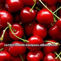 Fresh Cherries VERY HIGH GRADE HOT SALES