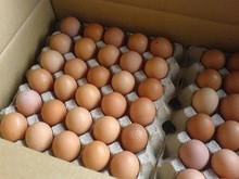 Farm Fresh Chicken Table eggs, Brown Shell chicken eggs, White shell chicken eggs