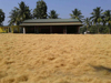 Coconut coir fibre Supplier