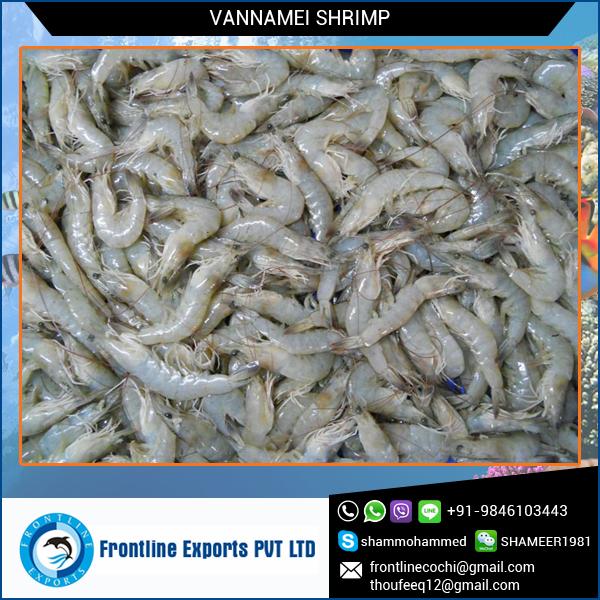 vannamei shrimp.jpg