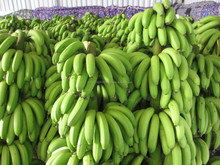 High quality Exported MDH's Cavendish Banana