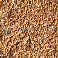 CRUSHED WHEAT FOR POULTRY FEED