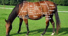 HORSE MEAT, LAMB MEAT, BEEF, PORK, GAME MEAT