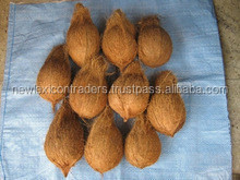 Semi Husked Coconut good quality