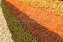 Canadian Green Lentils | Red Lentils | Brown Lentils/High Quality Lentiles/Red Lentiles/Green lentiles