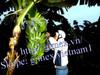 Vietnam best-quality fresh cavendish banana