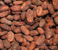 Grade A dried fermented cocoa beans for sale
