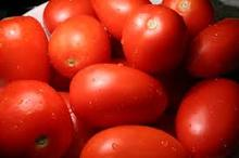 INDIAN RED TOMATO