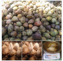 Export Quality Natural Indian Coconut