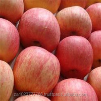 Fresh Apple of Fruit new fruits high quality HOT SALES