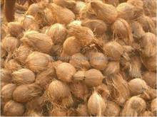 Good Quality Coconut Price