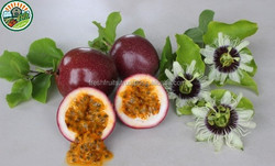 Frozen Passion Fruit Best Price from Vietnam, Passion Fruit (Pulp/Puree Seed-in, Seed-out)