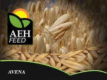 Wholesale feed Oats for animals - Avena
