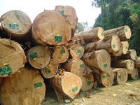 Big Size Keruing Log Laos wood