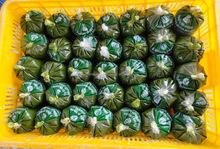 Frozen Best Cassava Leaf / Cassava Leaves from Vietnam