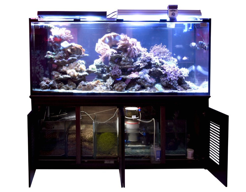 Sc aquariums 50 gallon starfire pnp system 24x24x20 buy for 50 gallon fish tank