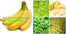 Ripen banana - yellow banana/ Fresh and green Cavendish banana in Viet Nam
