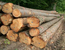 PHILIPPINE MAHOGANY,ROSEWOOD,YAKAL and other timber products(Logs and Sawn)