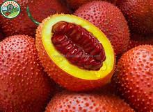 Manufacturer Supply The Highest Quality Frozen Gac Fruit Made in Vietnam