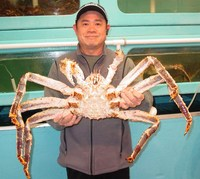 Live King Crabs / Frozen King Crab Legs