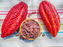 Cacao beans organic