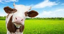 Milk Protein Concentrates (MPCs).