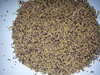 Red Clover Seeds