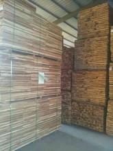 Malaysian Iron Wood (Kayu Belian)
