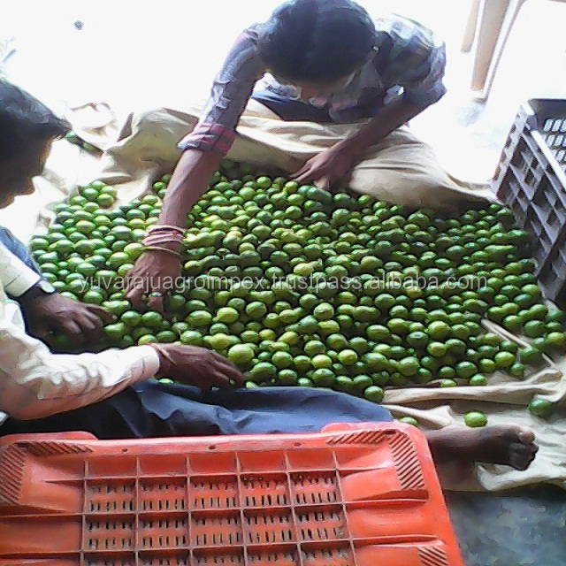Thailand Fruit Wholesaler Email Mail: Yellow Lemon Supplier From India / Singapore / Malaysia