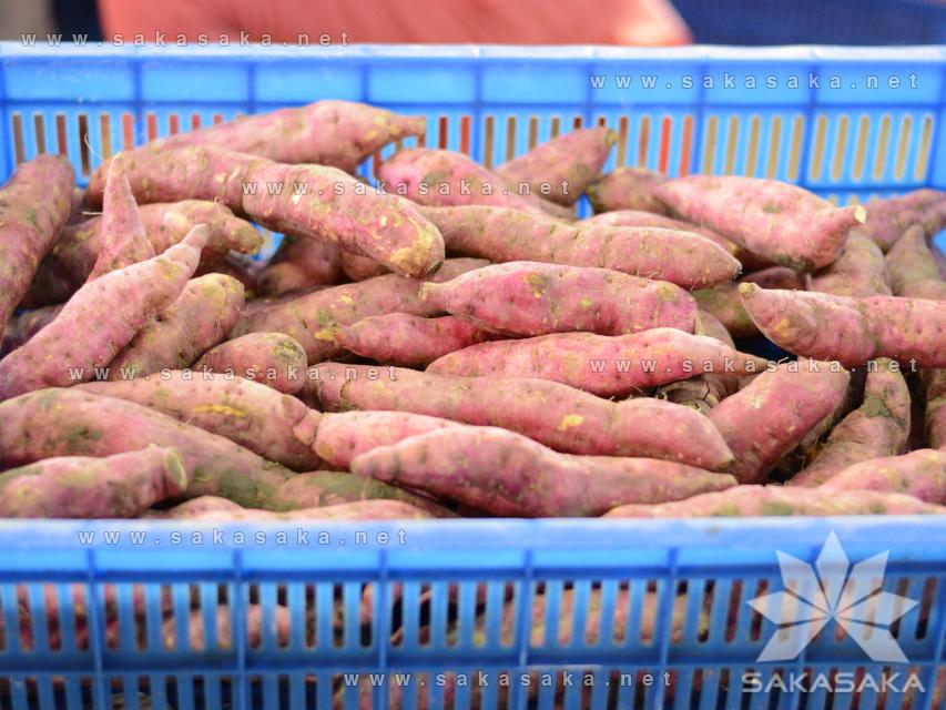 japanese-sweet-potato-02.jpg